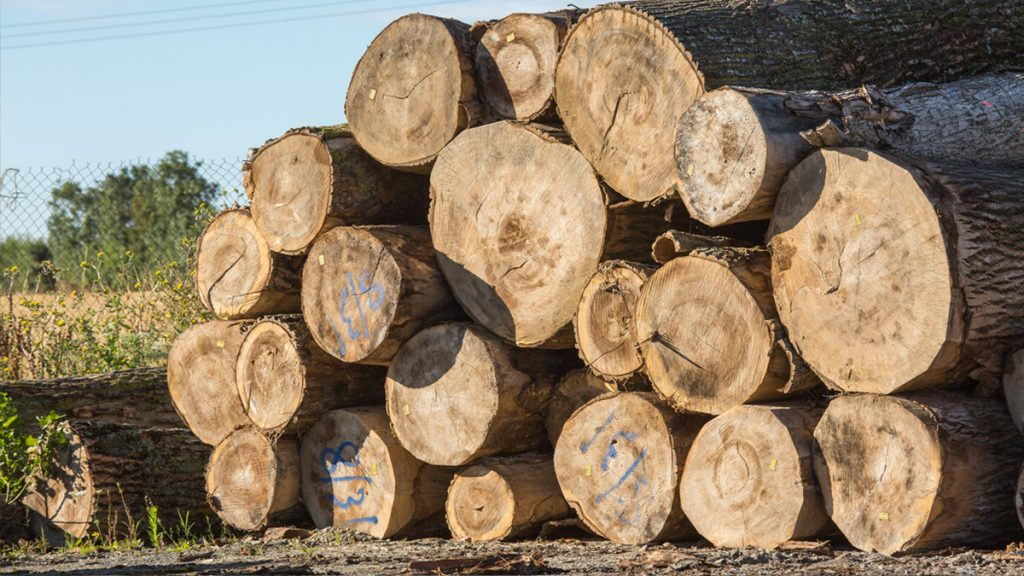Work from home lumberjack stacks his day's graft neatly