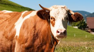 BILL GATES WANTS US TO EAT SYNTHETIC BEEF